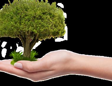 10.000 alberi per Ferrara. La Città che Vogliamo aderisce allo sciopero per il Clima